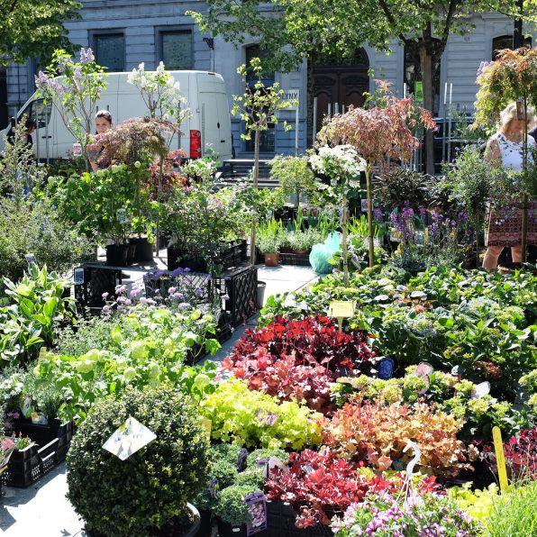 Le marché aux fleurs de Gand (Bloemenmarkt) sur le Kouter à lieu chaque dimanche matin