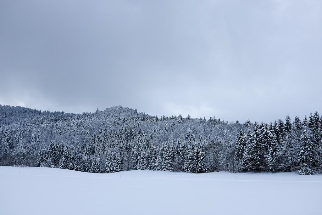 Jura-montagne-sapins-neige-hiver-randonnée