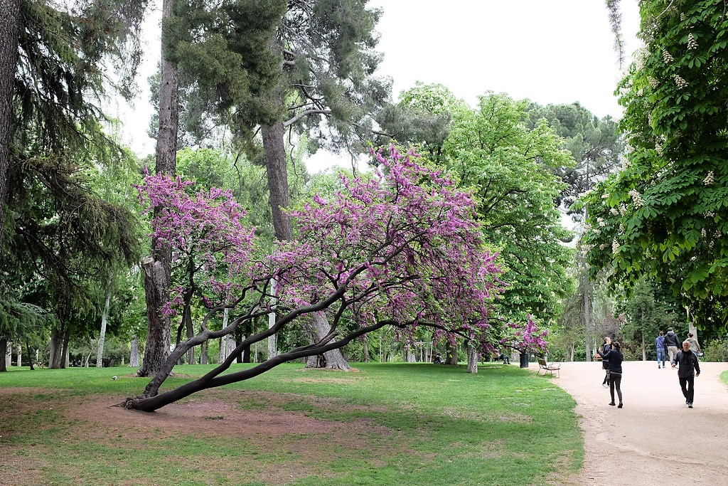 madrid-retiro-park