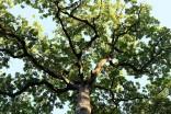 Les Jardins de Marqueyssac et leurs arbres magnifiques