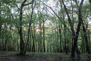 Les Jardins de Marqueyssac proches de Sarlat en Dordogne