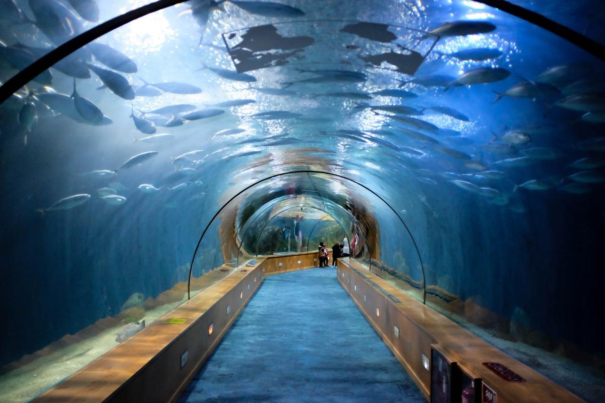 Valencia aquarium Oceanografic