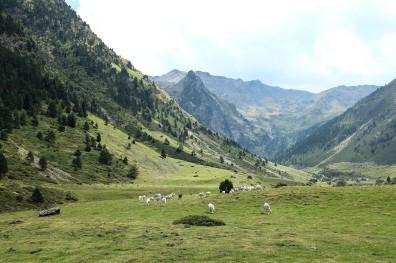 La très verte vallée du Moudang dans les Pyrénées