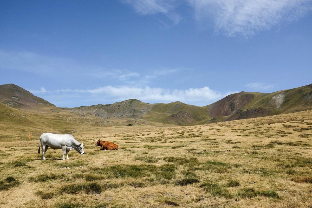 pyrenees paysage