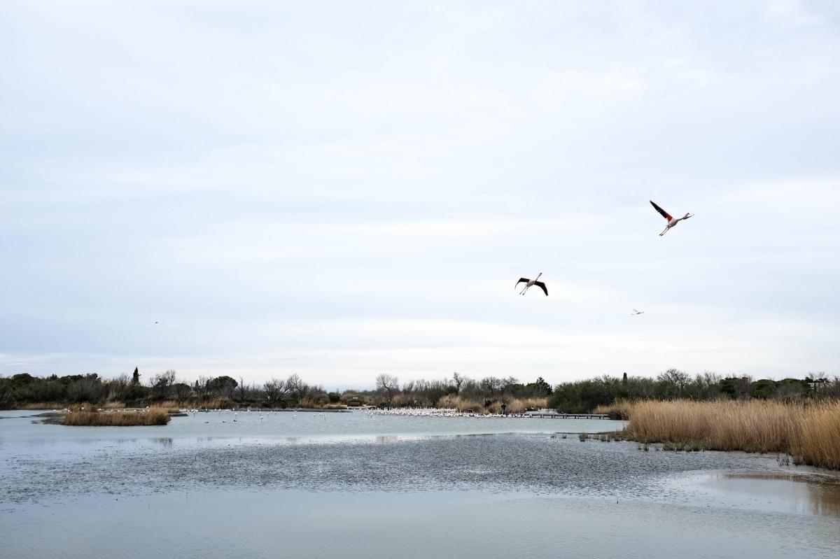 Camargue parc Ornithologique